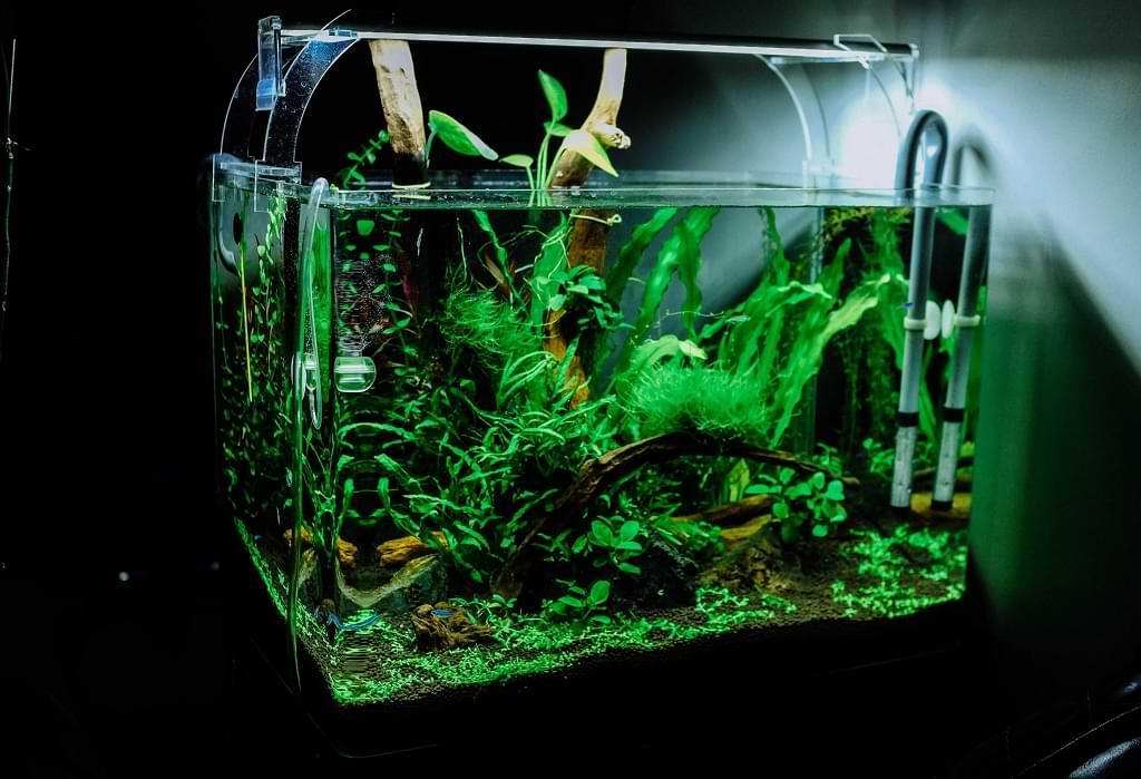 10 Jenis Tanaman Aquascape Untuk Mempercantik akuarium