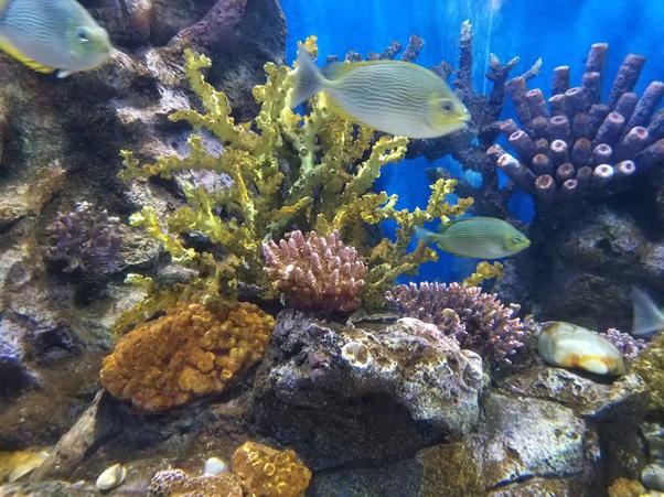 Spot diving dan snorkeling terbaik blublub - andalannews